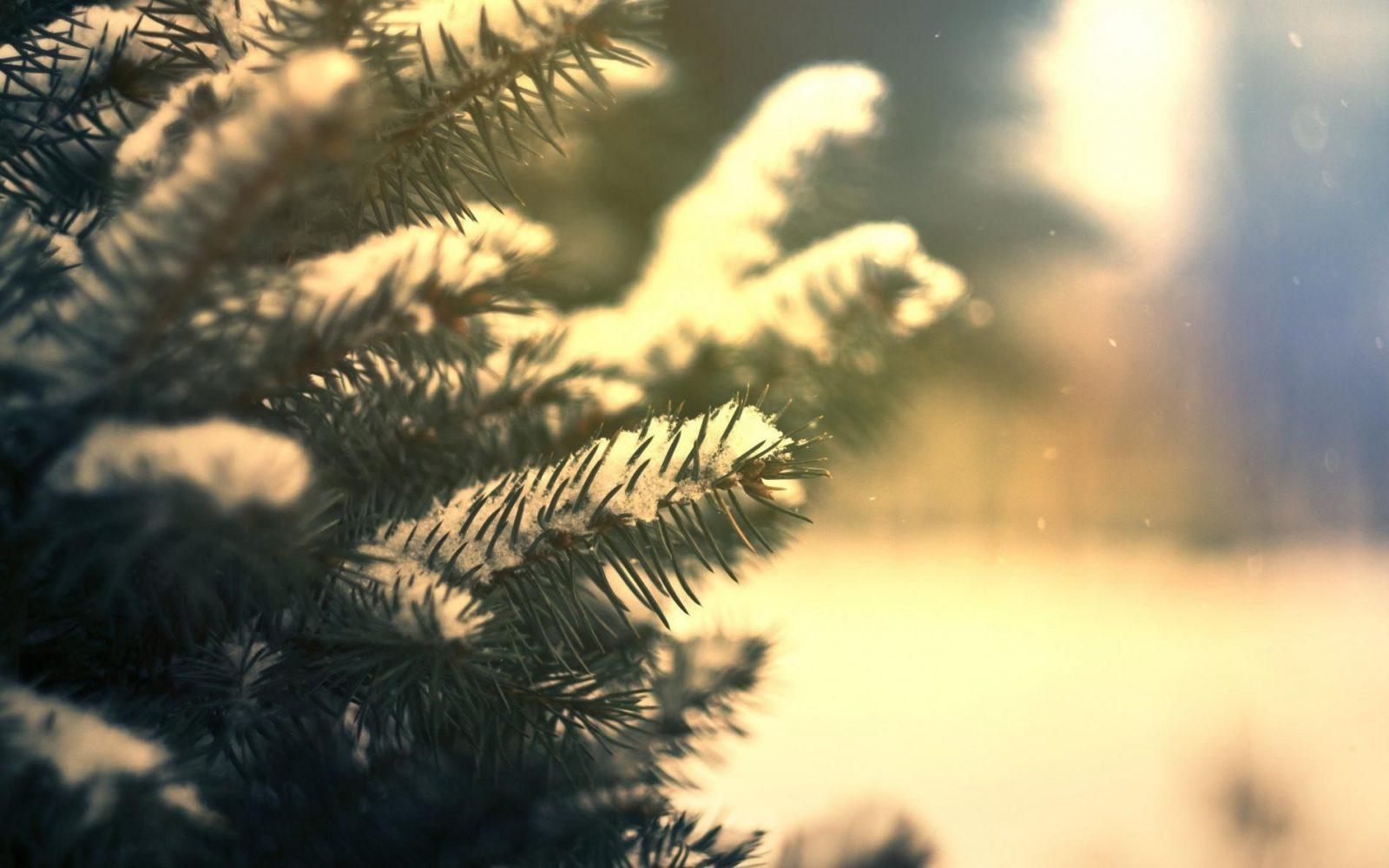 Albero Di Natale Hd.Come Scegliere Un Albero Di Natale Natale Agribrianza